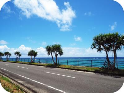 ブルーライト奄美 国道沿いのアダンの街路樹
